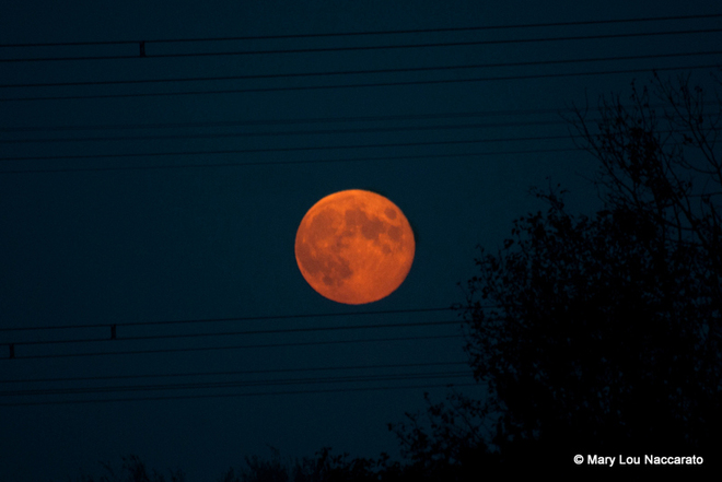 September's Harvest Moon Bowmanville, Ontario Canada