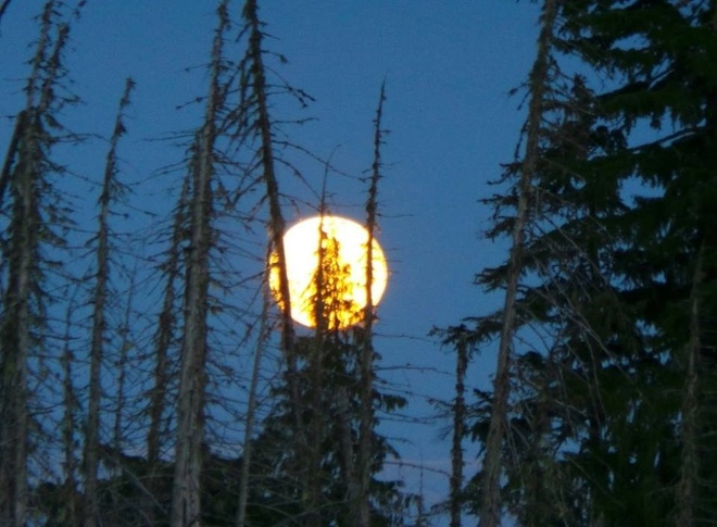 Harvest Moon Campbell River, British Columbia Canada