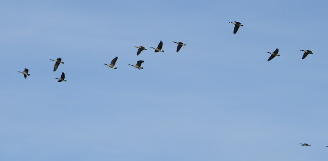 Flights in Motion Brandon, Manitoba Canada