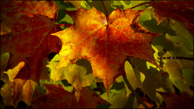 Esten Dr.. up close with an autumn leaf. Elliot Lake, Ontario Canada