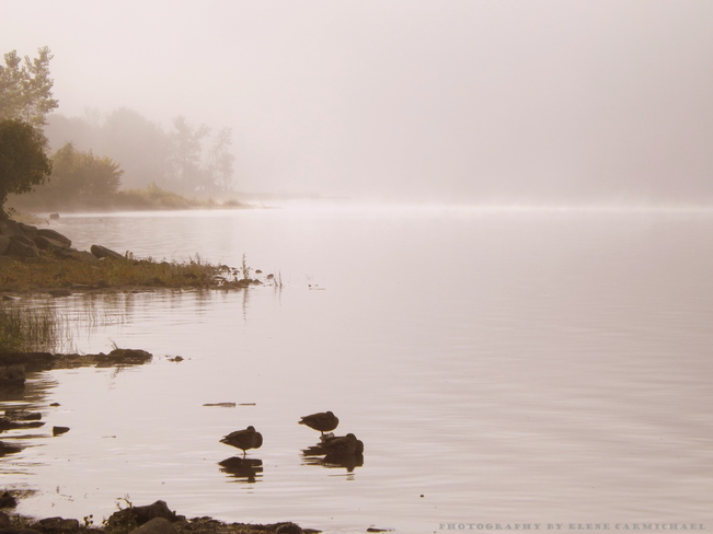 *Heavy Morning Fog* Aylmer, Quebec Canada