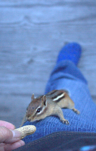 """up he goes to grab the peanut"" Timmins, Ontario Canada"