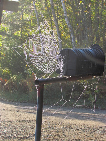 Wonderful Webs