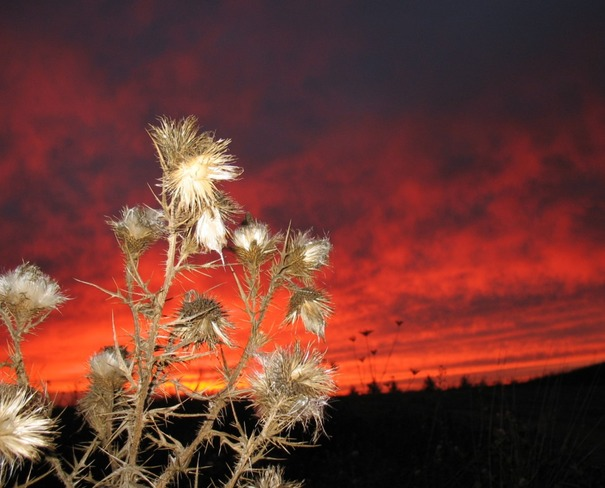Prickly Sunset Windsor, Nova Scotia Canada