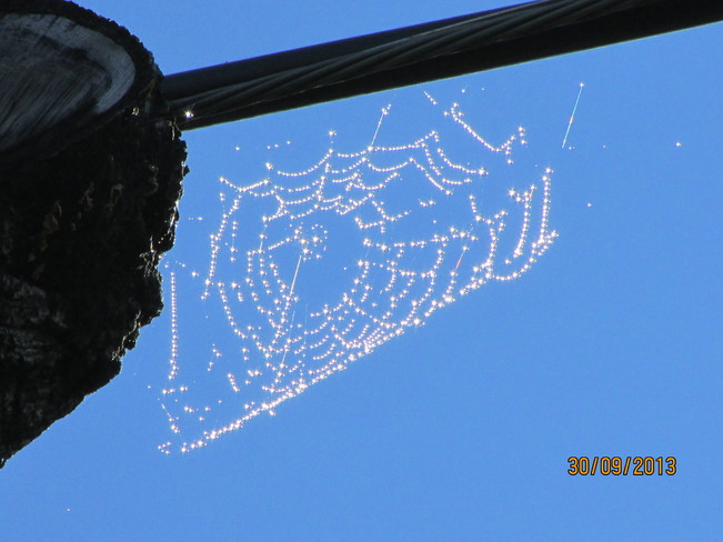 spider web Joggins, Nova Scotia Canada