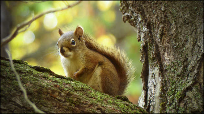 Sherriff Creek red trail squirrel. Elliot Lake, Ontario Canada