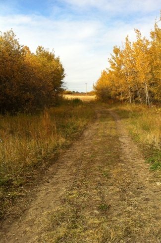 Fall Afternoon Lloydminster, Saskatchewan Canada