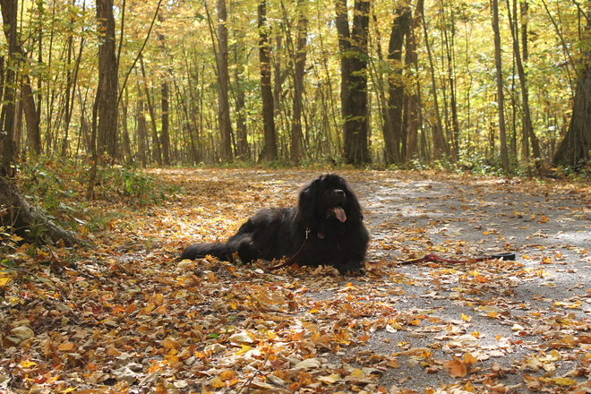 Tillie enjoying the Fall Foliage Kingston, Ontario Canada