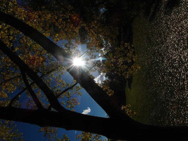 Sun shinning,leaves falling.Appreciating today. Calgary, Alberta Canada
