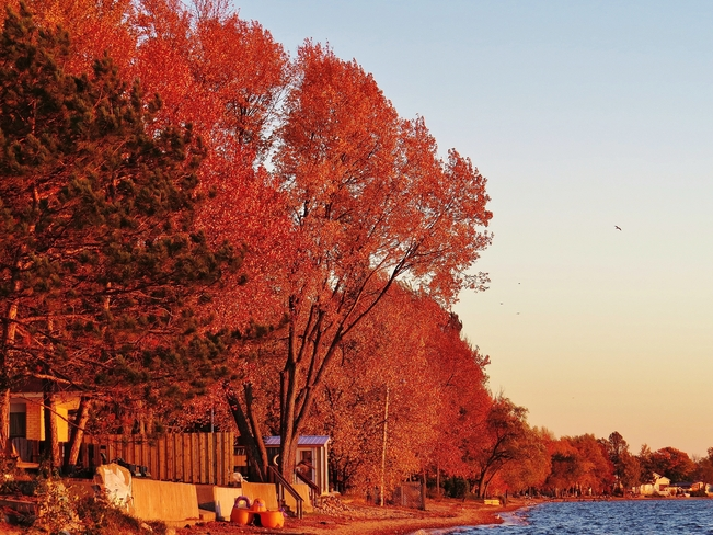 Setting sun casts a warm glow on the shoreline trees. North Bay, Ontario Canada