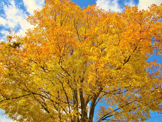 Fall at its best.... Orillia, Ontario Canada