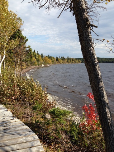 Fall day at Mac Brown's Park Musgravetown, Newfoundland and Labrador Canada