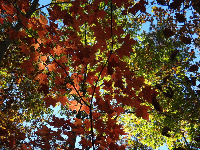 Fall Barrie, Ontario Canada