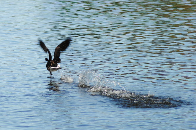 Walk on Water Ottawa, Ontario Canada