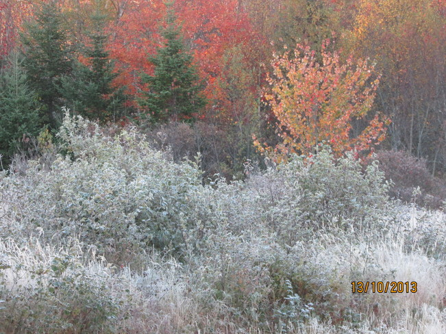first frost.. Joggins, Nova Scotia Canada