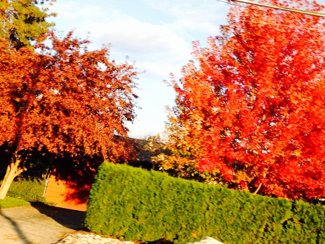 hello beautiful fall! Kelowna, British Columbia Canada