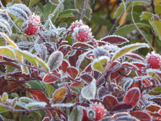 First Frost Kingston, Nova Scotia Canada