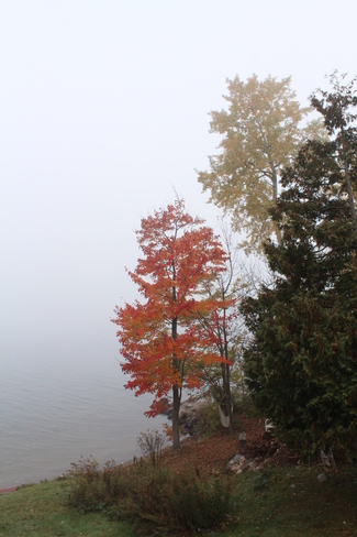 Foggy or what?! Blind River, Ontario Canada