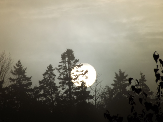 sun breaking thru the foggy morning New Minas, Nova Scotia Canada
