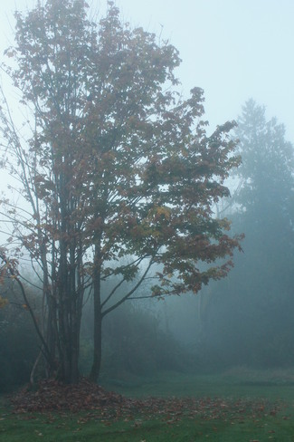 FALL IN A MISTY MORNING Aldergrove, British Columbia Canada