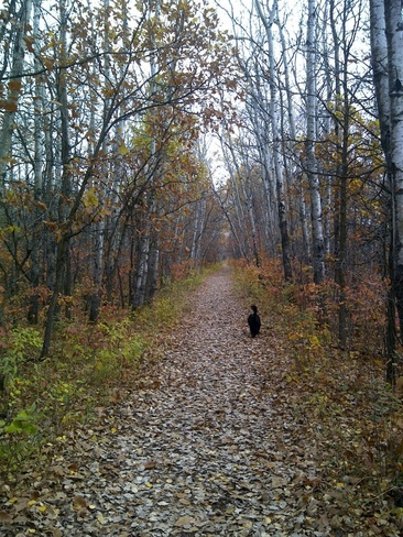Sammy in the forest Winnipeg, Manitoba Canada