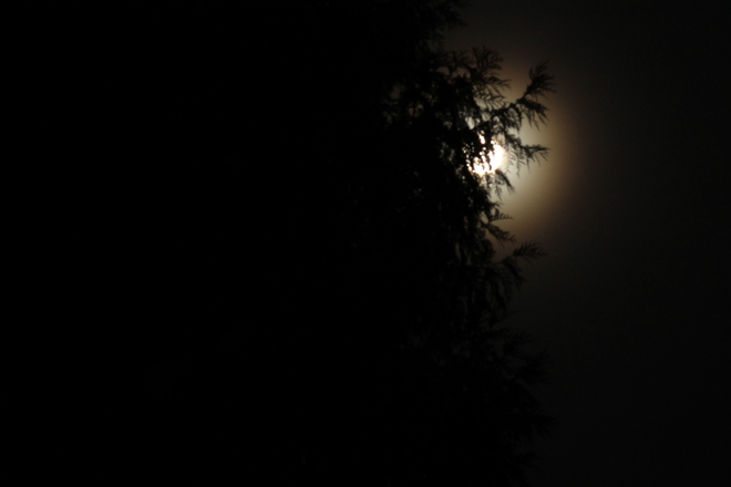FULL MOON AND TREE Aldergrove, British Columbia Canada
