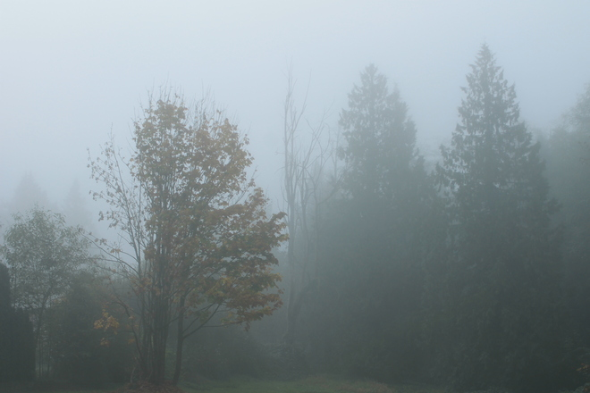 FOGGY MORNING Aldergrove, British Columbia Canada