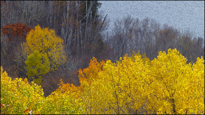 Fire Tower, looking down on the last yellow leaves. Elliot, Ontario Canada