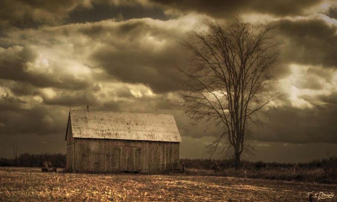 Old Barn and Bare Tree Smiths Falls, Ontario Canada