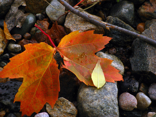 Fall North Bay, Ontario Canada