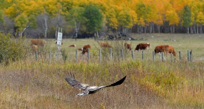 Fields of Flight Hodgson, Manitoba Canada