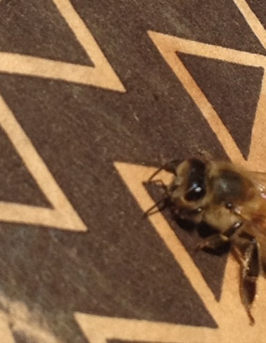 RARE !!! Mountian Honey Bee Cawston, British Columbia Canada