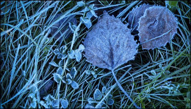 Esten Dr. morning frost on the leaves and grass. Elliot Lake, Ontario Canada