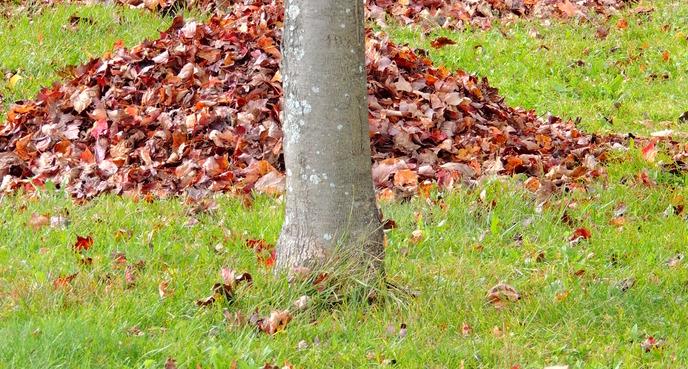 Nouvelles envie de jeter vos feuilles vous ne devriez for Sac pour feuilles mortes