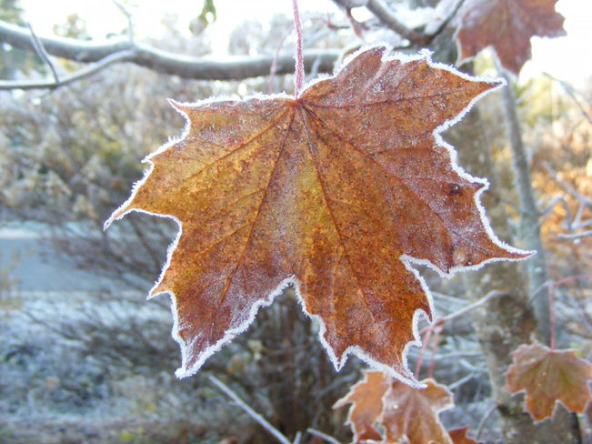 Autumn Frost-Leaf Noonan, New Brunswick Canada