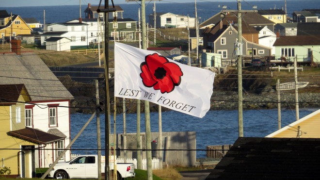 POPPY FLYING IN HE WIND Bonavista, Newfoundland and Labrador Canada