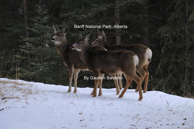 Me & my friends! Banff, Alberta Canada