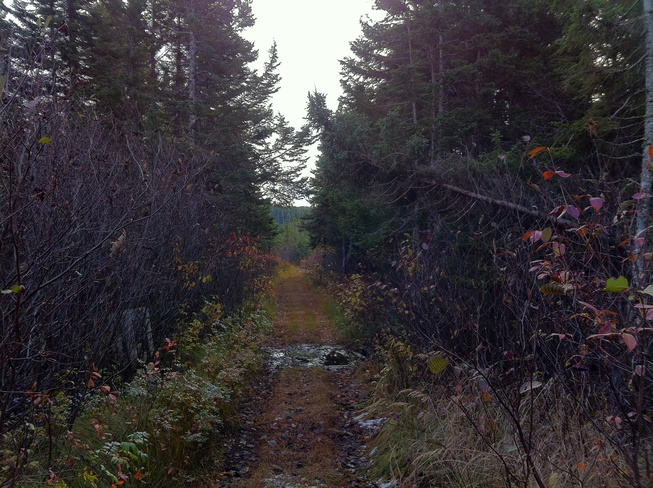 In the wood path Gander, Newfoundland and Labrador Canada