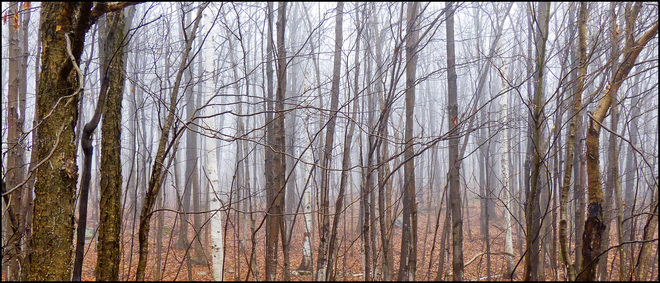 Esten Dr. woods in the fog. Elliot Lake, Ontario Canada