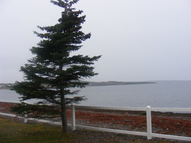 Raining Birchy Bay, Newfoundland and Labrador Canada