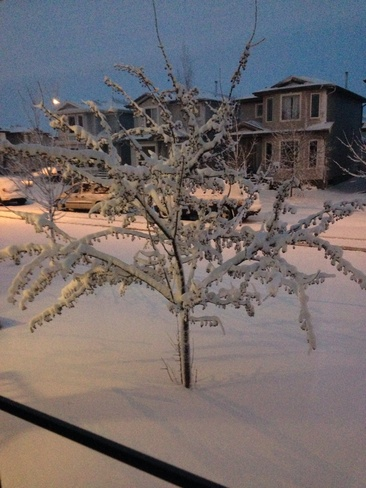 What we woke too! Leduc, Alberta Canada