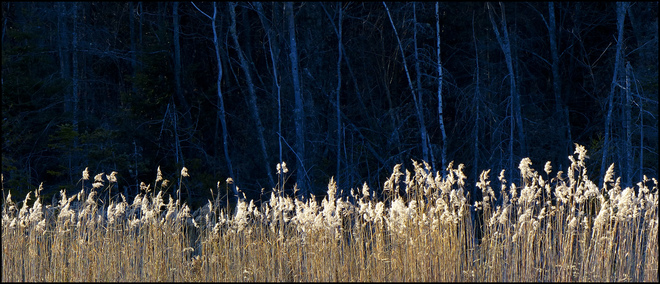 Sherriff Creek, long row of grasses. Elliot Lake, Ontario Canada