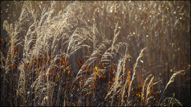 Sherriff Creek, sun light grasses. Elliot Lake, Ontario Canada