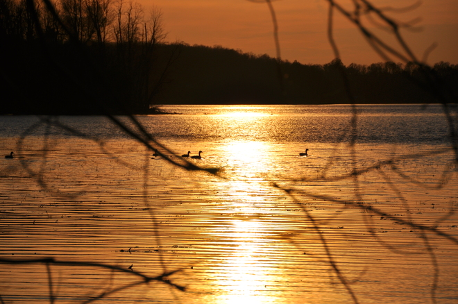 Geese & Sunset Rideau Lakes, Ontario Canada