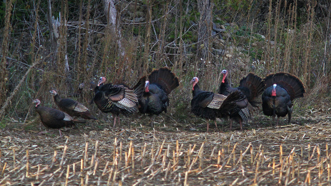 Strutting Their Stuff Cornwall, Ontario Canada