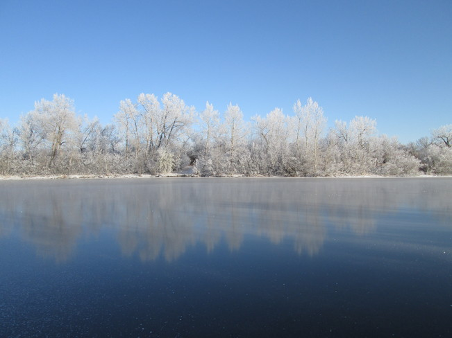 Trees and Ice Frost Reflection Kindersley, Saskatchewan Canada