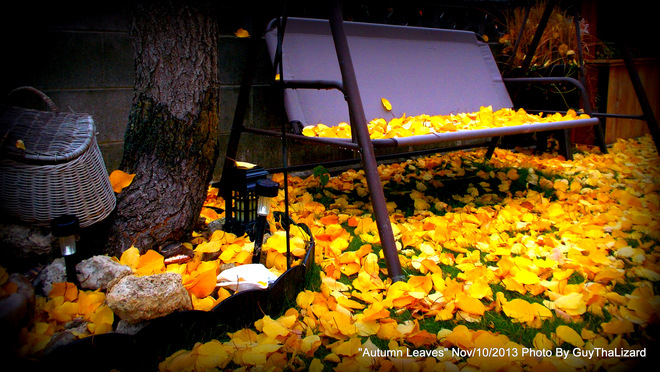 Autumn Leaves Penticton, British Columbia Canada