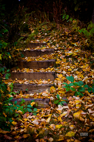 Stairs in woods Sherwood Park, Alberta Canada