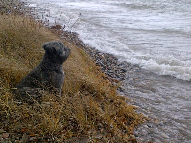 Dog Watch Lake Huron Gale Warning Point Clark, Ontario Canada