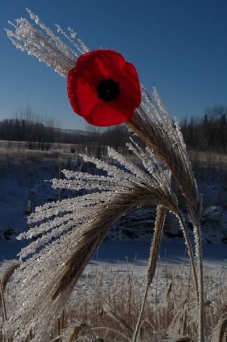 Lest we forget Whitecourt, Alberta Canada